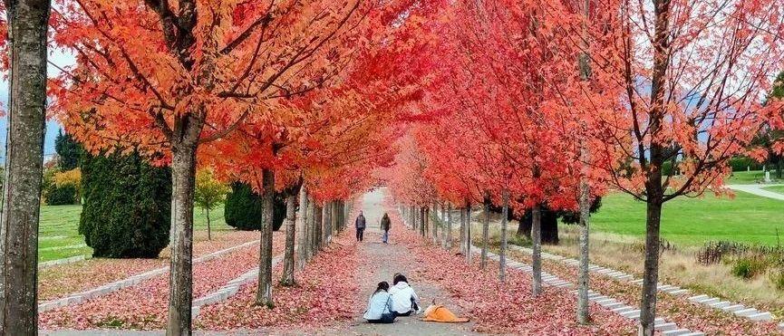 美!大温8大赏枫叶的绝美地点!随手就是网红照!