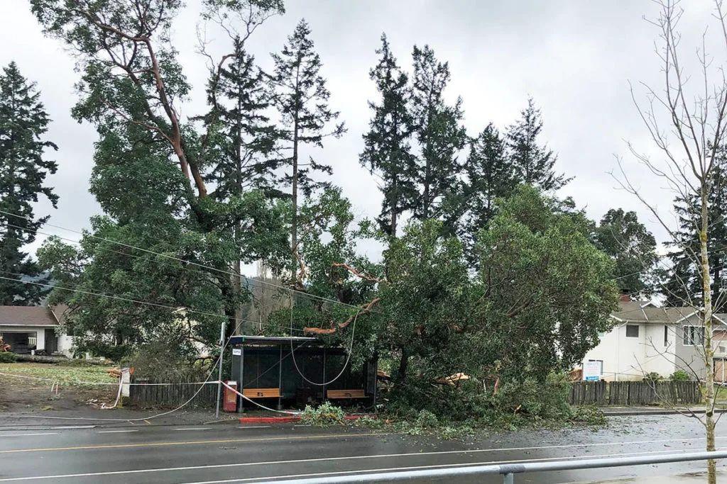 今天的风也太大啦!强风导致岛上部分地区停电数次。。BC省就业率渐渐回升!