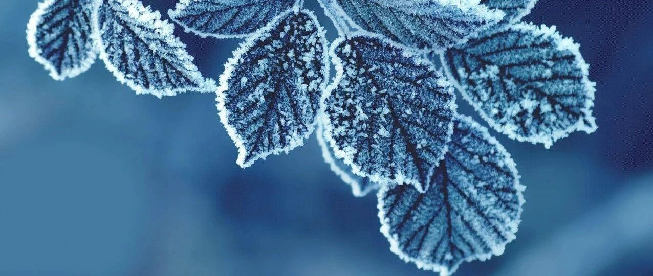 冻死了… 昨天是维多利亚近百年最冷的一天!!NDP大胜,BC居民每家发$1000好期待!