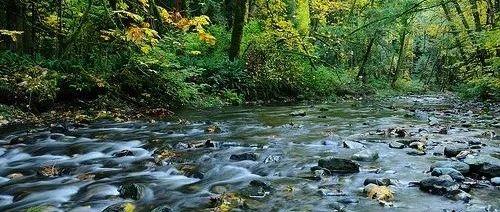 万圣节周末新增9例!终于,又到了一年一度三文鱼回流季!!温哥华岛本周迎来阴雨天。。。