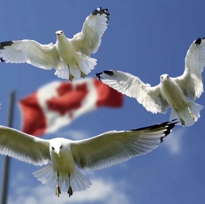 [官宣]加拿大临时居民申请恢复身份时间延长!未登陆的新移民不用愁