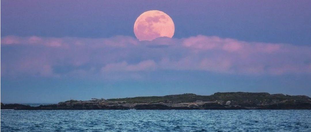 """维多利亚惊现""""超级粉红月亮""""!!!BC渡轮开始拒绝部分乘客登船。。。。"""