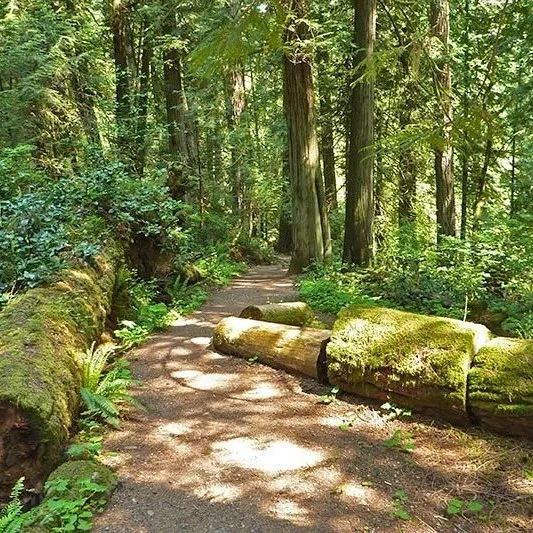 走起!维多利亚5大登山好去处,一起来做森林SPA吧!
