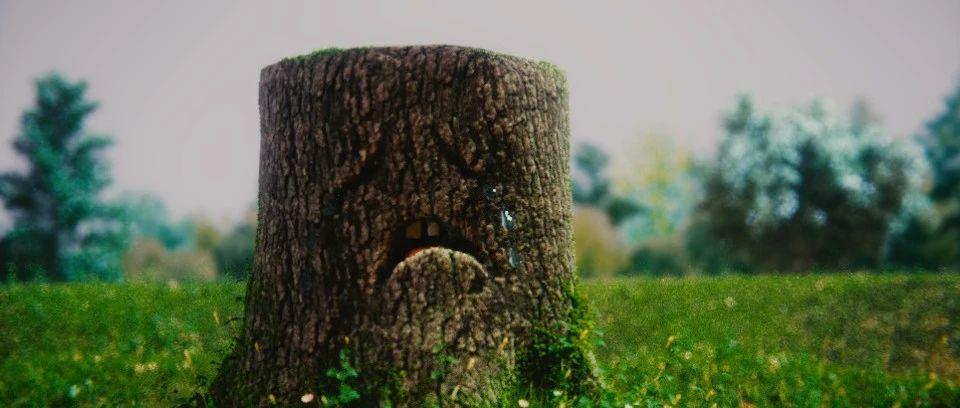 重磅!今日起,BC省两剂疫苗间隔缩至8周!哭泣,岛上的古树被大量砍伐。。。