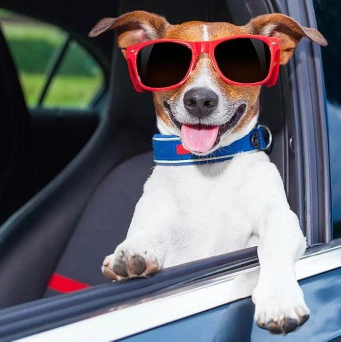 Attention!!家有毛孩子的注意!BC省近千只狗狗被困车上,有的活活被热死了。。