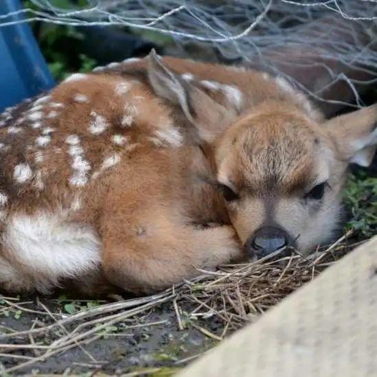"""生活   家中常出现松鼠、浣熊还有小鹿在后院栖息?快来看看请走这些""""不速之客""""的秘籍吧!!"""